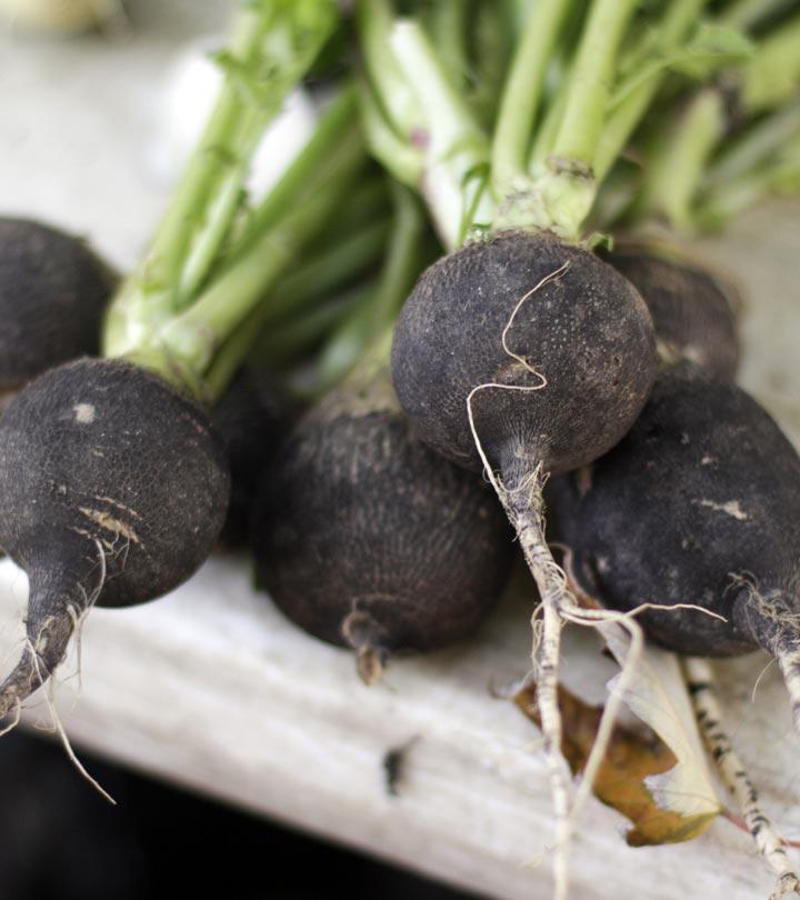 17 Amazing Benefits Of Black Radish For Skin, Hair, And Health