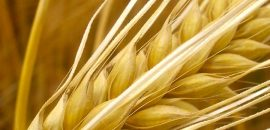 22-Best-Benefits-Of-Barley-(Jau)-For-Skin,-Hair-And-Health