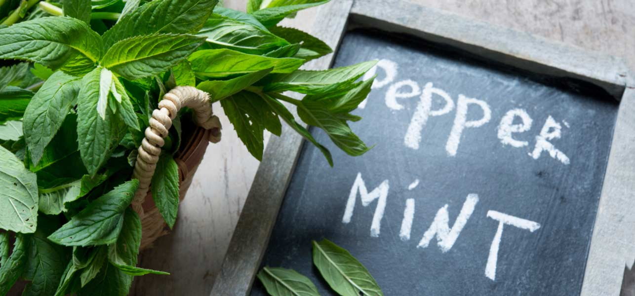 23-Amazing-Benefits-Of-Peppermint-Leaves-For-Skin,-Hair,-And-Health