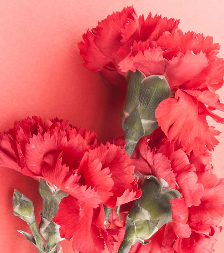 7 Most Beautiful Carnation Flowers