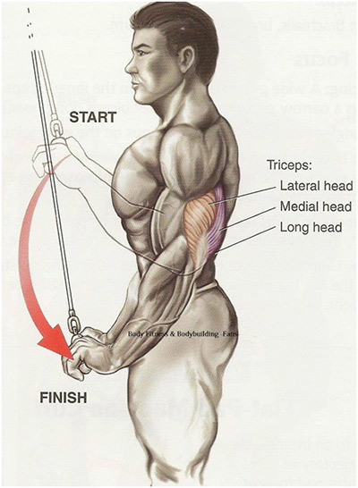 Benefits of Triceps Exercises