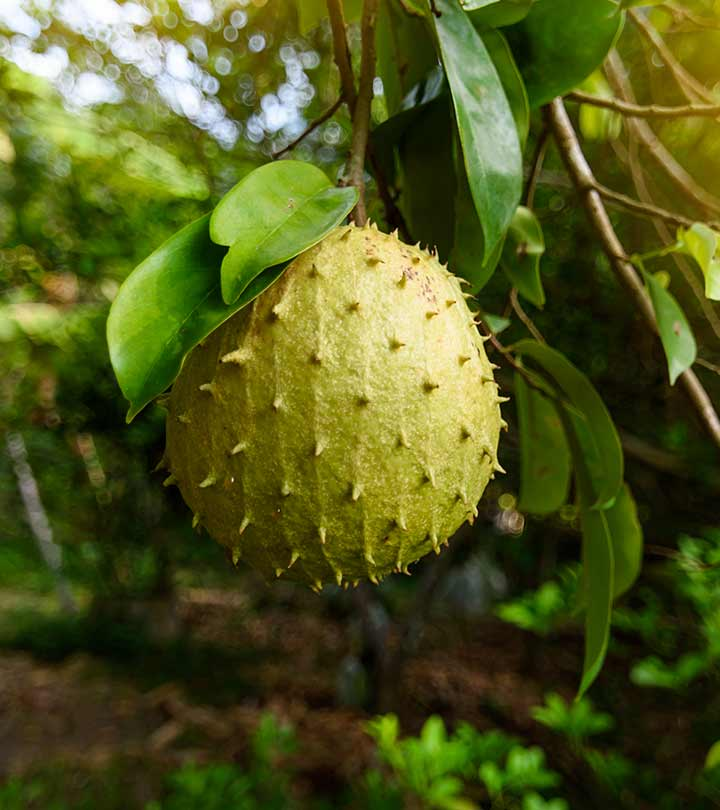Can Soursop Leaves Really Cure Cancer? – 6 Evidence-based Benefits Await You!