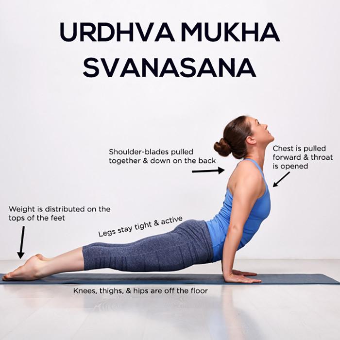 Kết quả hình ảnh cho Urdhva mukha svanasana