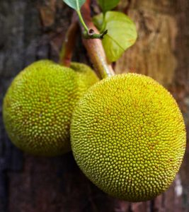 10 Amazing Benefits Of Breadfruit For Skin, Hair And Health