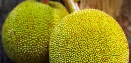 10 Amazing Benefits Of Breadfruit (Bakri Chajhar) For Skin, Hair And Health