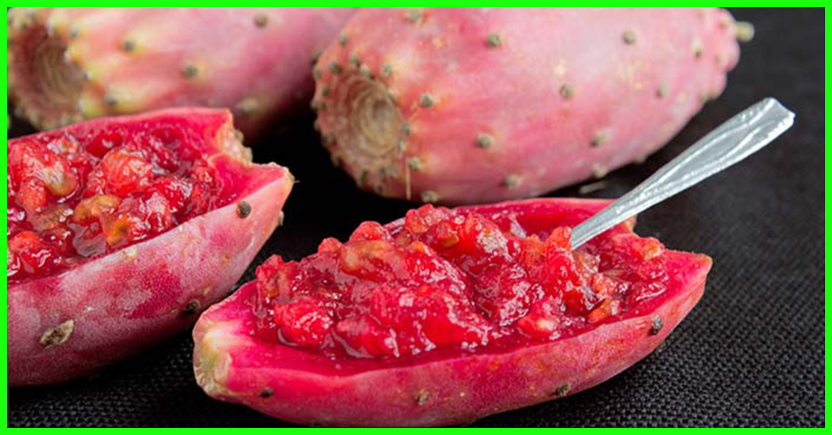 31 Top Benefits Of Prickly Pear Nagfani For Skin Hair Health