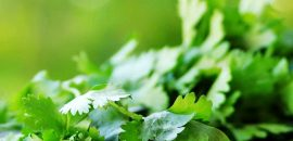 604_20 Best Benefits Of Cilantro (Dhaniya) For Skin, Hair And Health_140418064