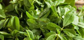 621_6 Best Benefits Of Fenugreek Leaves (Kasuri Methi) For Skin, Hair And Health_iStock-545371976