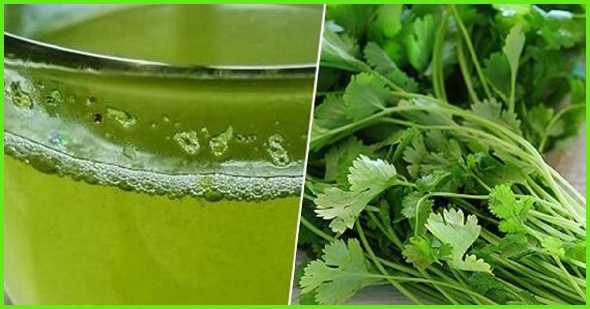 10 Health Benefits Of Cilantro Recipes And Risks