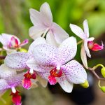 Top 25 Beautiful Orchid Flowers