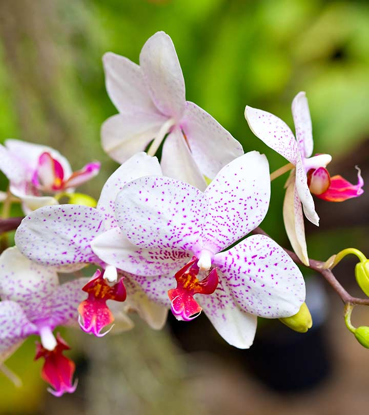 best orchid house plants. Top 25 Beautiful Orchid Flowers