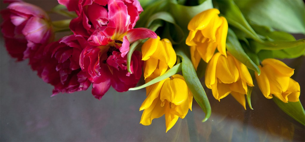 Top 25 Most Beautiful Tulip Flowers