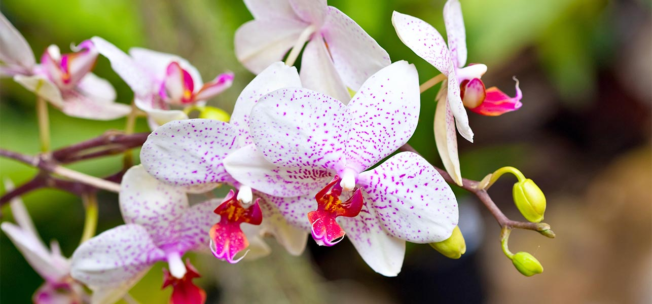 top  beautiful orchid flowers, Natural flower