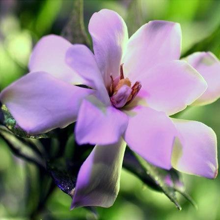 Gardenia Jasminoides Frostproof