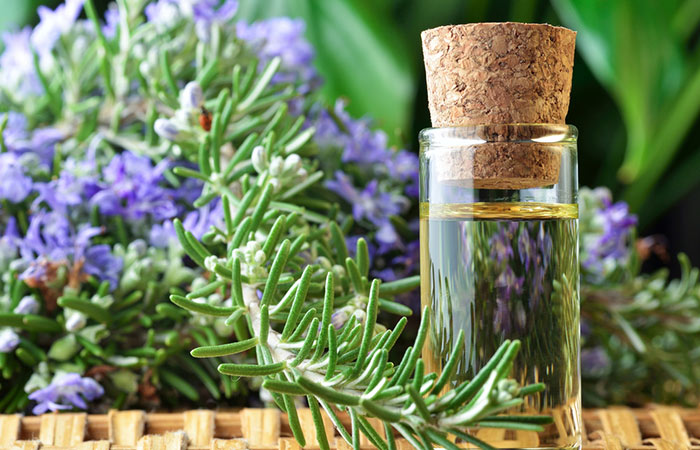Rosemary-Essential-Oil-For-Treating-Dandruff