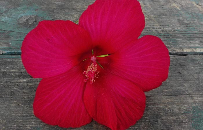 6. Hibiscus And Bhringraj Oil For Hair Growth