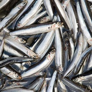 Anchovies-300x300