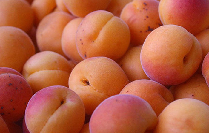 apricots-for-health1