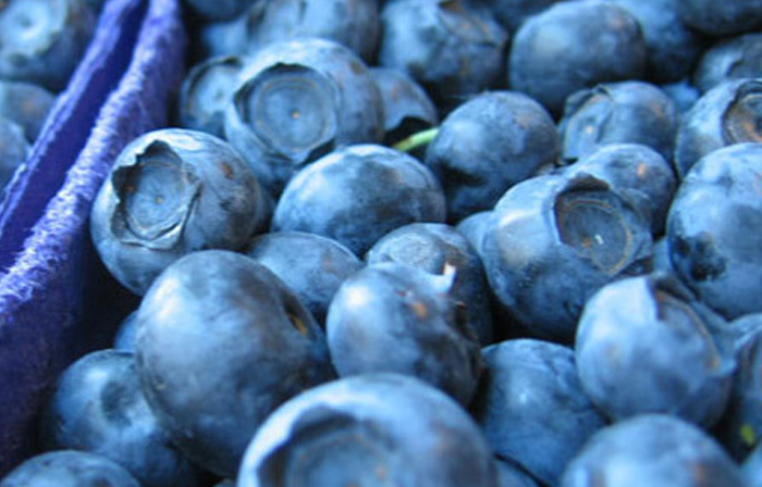 blueberries-for-health1