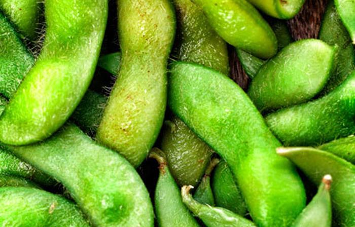 soybean1