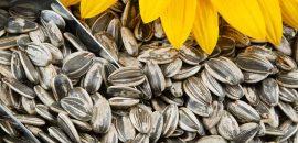 579_34 Amazing Benefits Of Sunflower Seeds (Surajmukhi Ke Beej) For Skin, Hair, And Health_iStock_000017293917