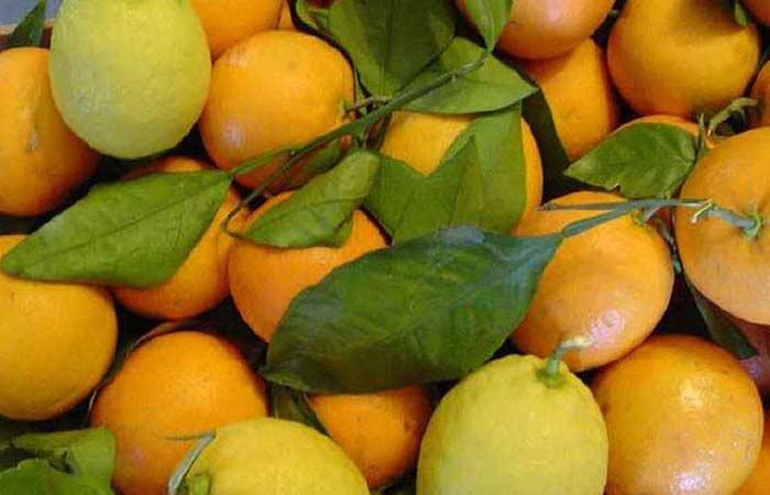 Lemon-and-Orange1