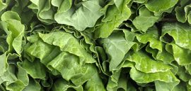 10-Amazing-Benefits-Of-Collard-Greens-For-Skin-Hair-And-Health