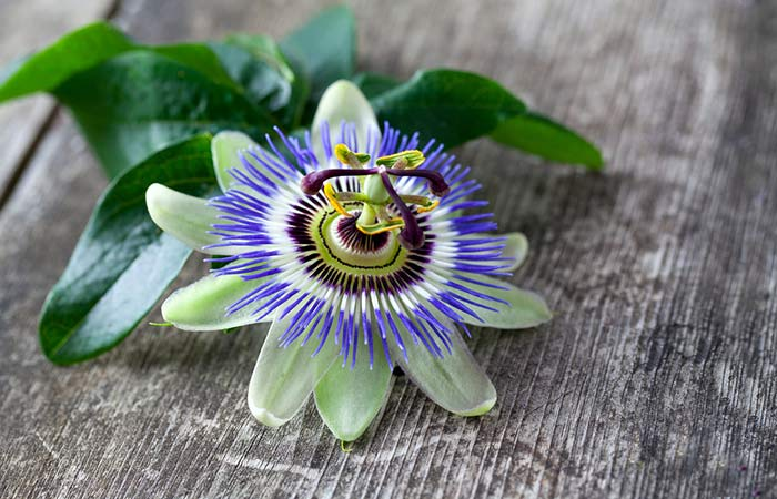 11. Passionflower