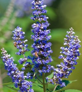 12 Amazing Health Benefits Of Vitex Herb
