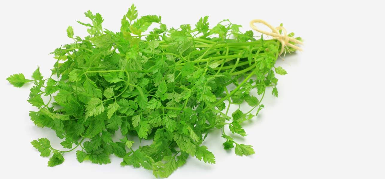 http://cdn2.stylecraze.com/wp-content/uploads/2014/01/13-Amazing-Benefits-And-Uses-Of-Chervil-For-Skin-Hair-And-Health.jpg