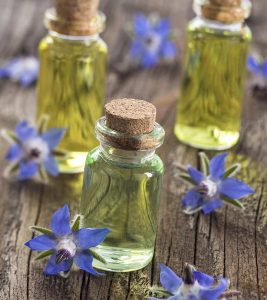 13 Benefits Of Borage Oil For Optimum Health