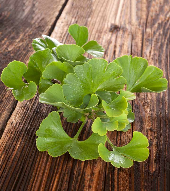 21 Amazing Benefits Of Ginkgo Biloba For Skin, Hair And Health