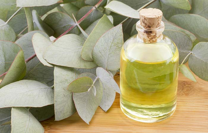 7. Essential Oil For Laryngitis