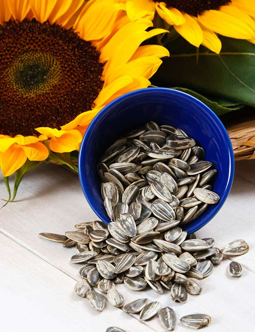 9. Sunflower Seeds