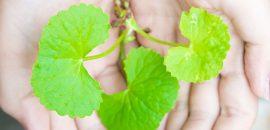 Amazing-Benefits-Of-Gotu-Kola-For-Skin-Hair-And-Health