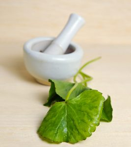 Gotu Kola 9 Powerful Benefits + Side Effects + Dosing