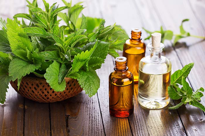 Peppermint And Eucalyptus Essential Oil