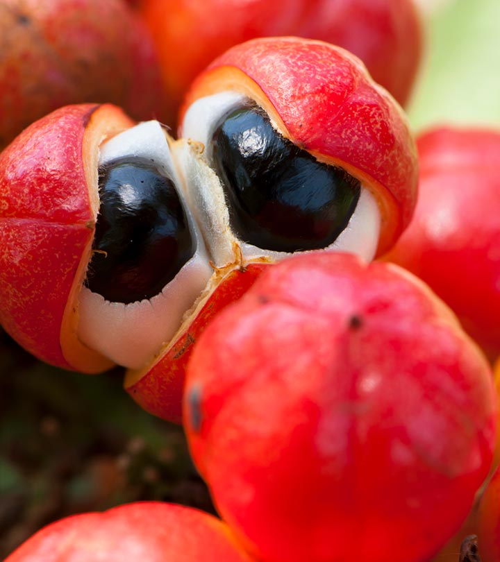 The Goodness Of Guarana What Is It Why Should You Try It