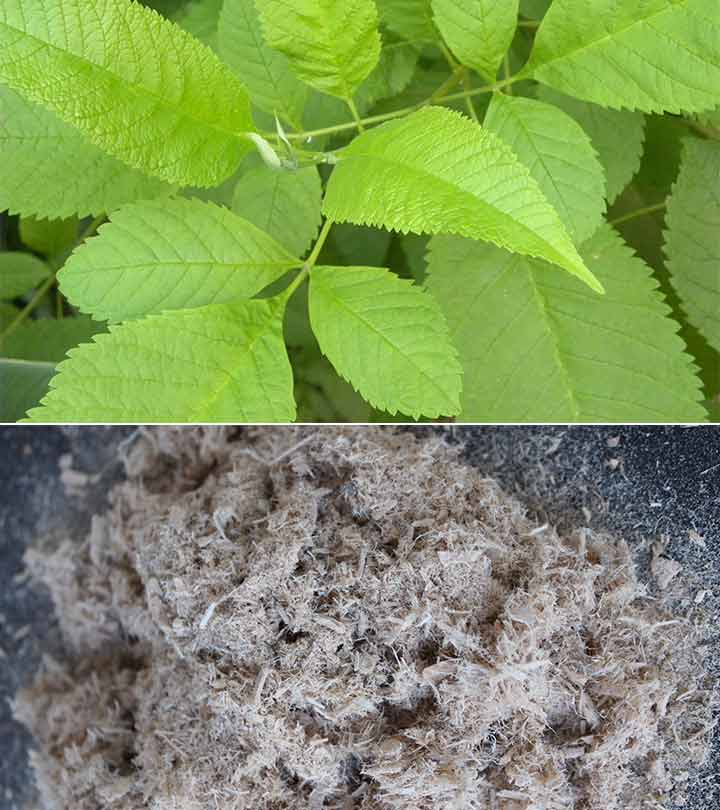 What Does Slippery Elm Do To Your Body?