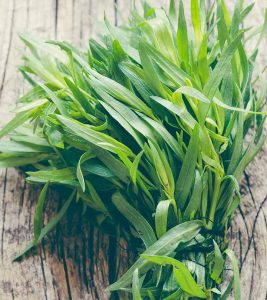 What Is Tarragon How Is It Beneficial To Your Health