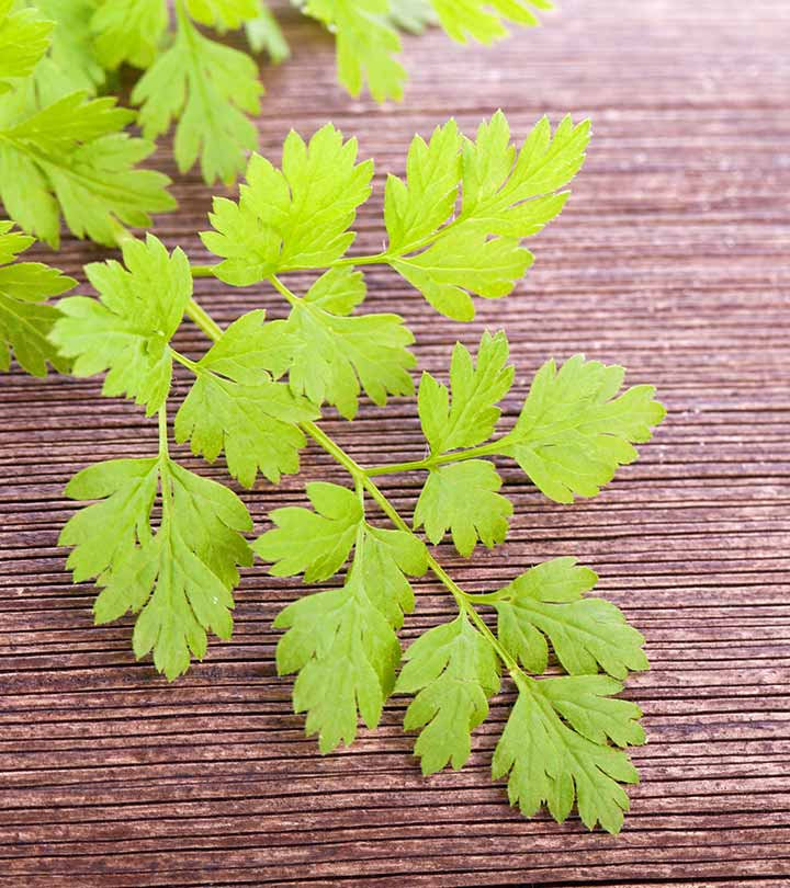 Why Chervil Is Not Just Another Weed: Benefits, Facts, And Recipes