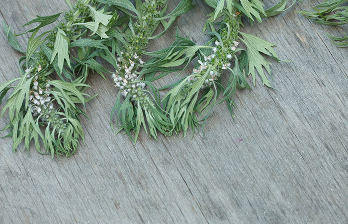 22.-Motherwort-For-Goiter