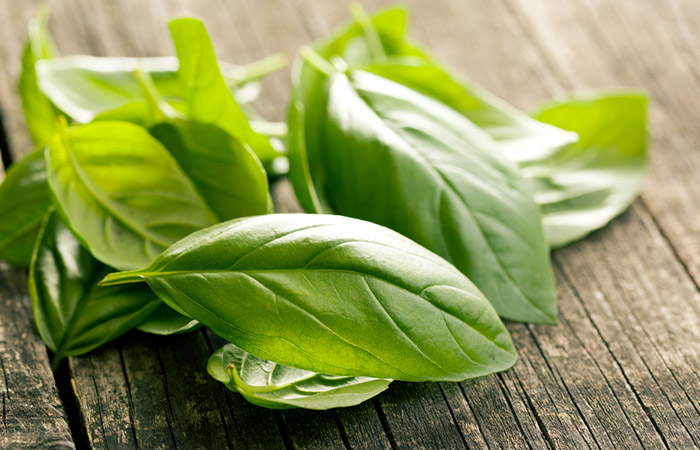 Basil-Leaves
