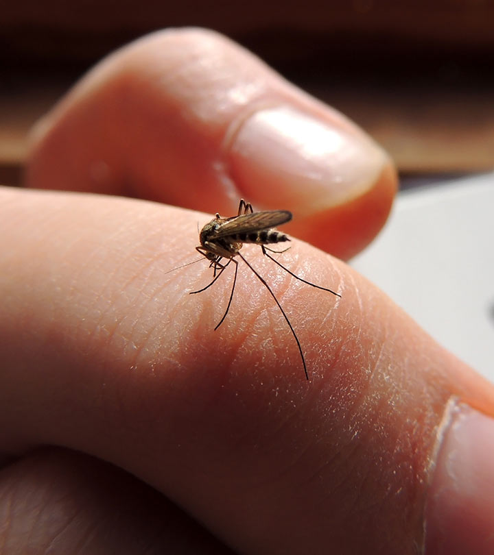 Effective-Home-Remedies-For-Mosquito-Bites