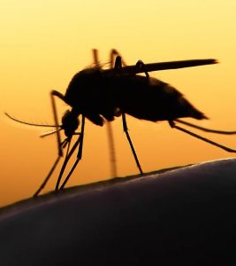 Malaria: Causes, Symptoms, Natural Remedies, And Prevention Tips