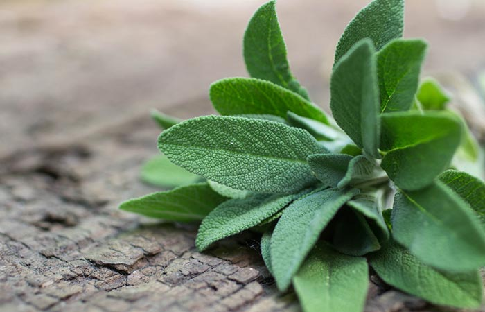 Herbs for Diabetes - Sage