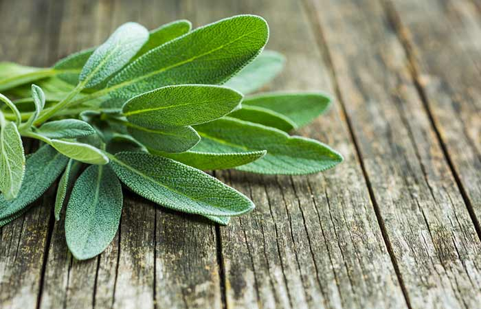 What Is Sage Where Does It Come From