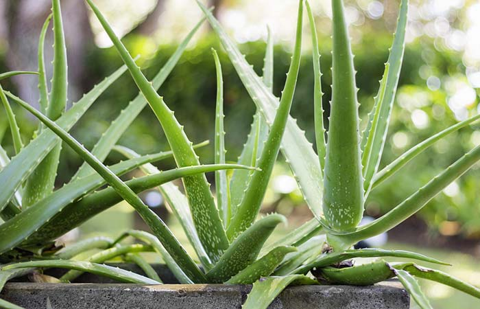 2. Aloe Vera For Flawless Skin