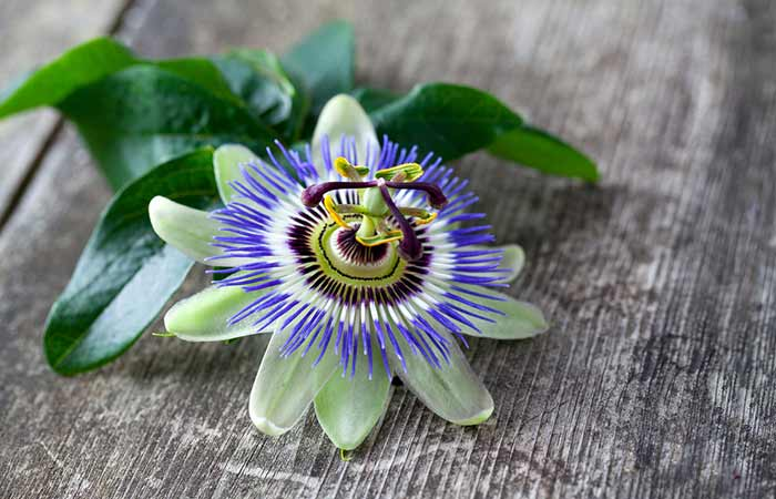Hot Flashes - Passion Flower