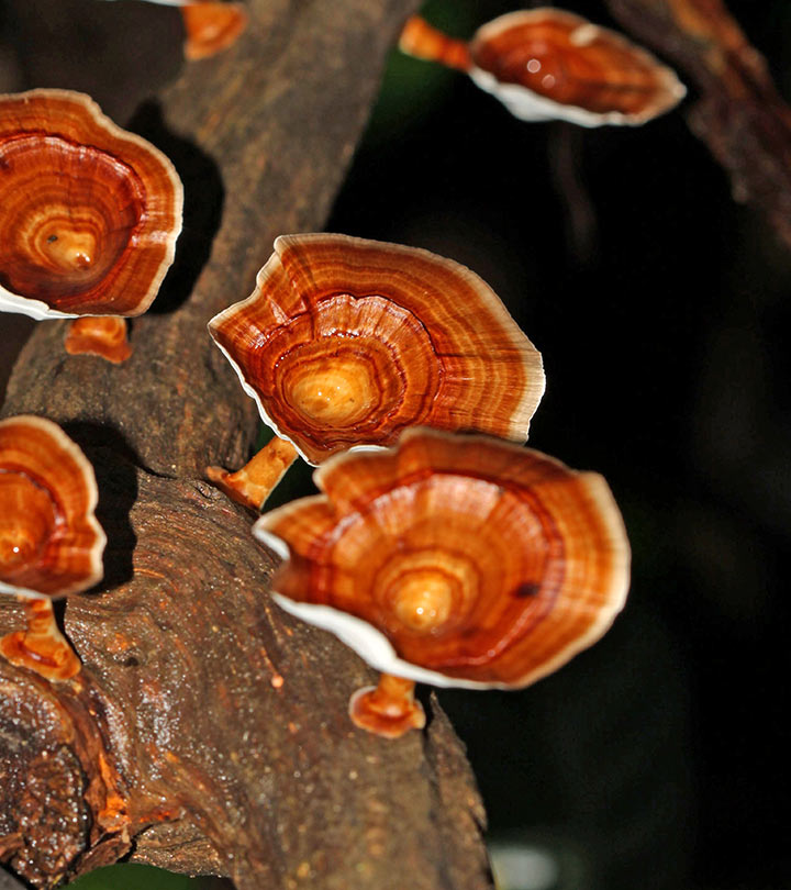 15 Wonderful Benefits Of Reishi For Skin, Hair And Health